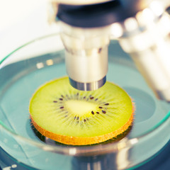 kiwi fruit in a laboratory microscope