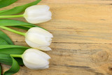 White tulips on old wooden background
