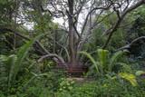 Kirstenbosch Gardens bench under a large tree poster