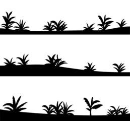 Agave, vector desert landscape