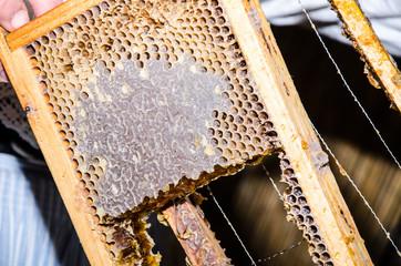 lavorazione del miele