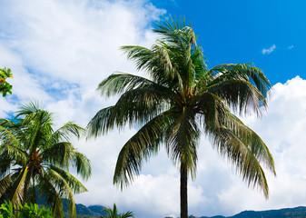 Palms Plants Garden