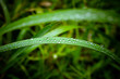 Water drops on the green grass. Macro