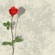 Obrazy na płótnie, fototapety, zdjęcia, fotoobrazy drukowane : abstract grunge background with rose