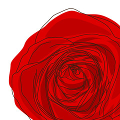 Vector red rose  on white background