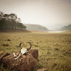 National park Periyar Wildlife Sancturary, India