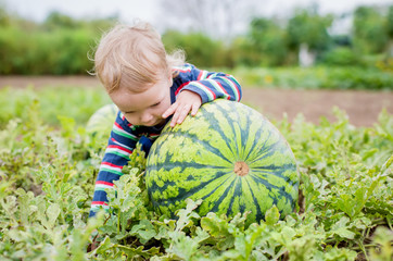 Happy toddler boy chooses a watermelon