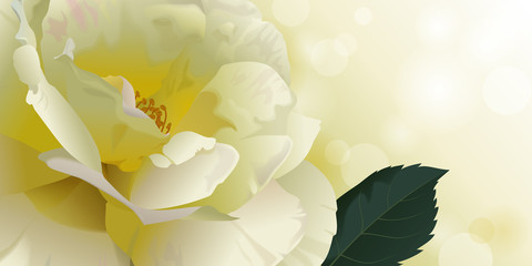 Floral background or banner with yellow rose