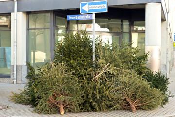 Alte Weihnachtsbäume