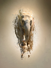 Elephant, abstract animal concept