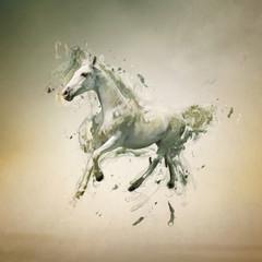 fototapeta biały koń w ruchu