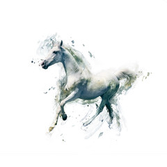 White horse, abstract animal concept isolated on white
