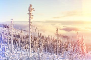 Aufziehender Nebel im winterlichen Bayerischen Wald