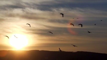 Wasservögel - Schweden