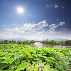 skyline,lake and waterlily in hangzhou,west lake