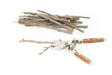 Secateurs with fruit twigs on white - pruning concept