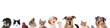 Leinwanddruck Bild - Unterschiedliche Haustiere – Köpfe in einer Reihe