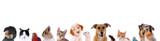 Fototapety Unterschiedliche Haustiere – Köpfe in einer Reihe