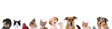"""Постер, картина, фотообои """"Unterschiedliche Haustiere – Köpfe in einer Reihe"""""""