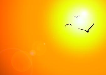 Sonnenuntergang Vögel