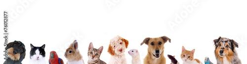 Leinwanddruck Bild Unterschiedliche Haustiere – Köpfe in einer Reihe
