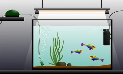 Aquarium. Aquarium equipment.
