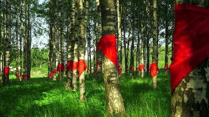 Red pioneer ties tied at birch. 4K.