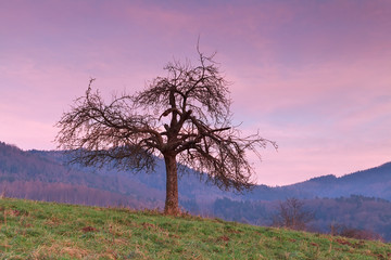tree over mountains at red sunset