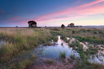 swamp at summer sunrise