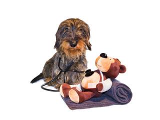 Tierarztpraxis, Tierarzt bei der Untersuchung