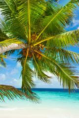 Rest in Paradise - Malediven - Palme am Strand