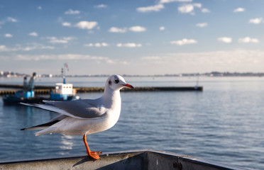 Lonely seagull in harbor of Poole, United Kingdom