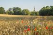 Wiosenne ukwiecone pole nieopodal wsi
