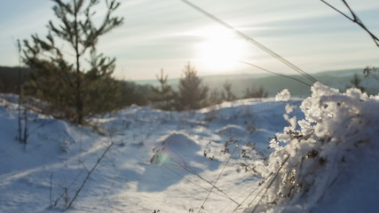 Grass covered with snow at sunset. Small Depth of Field (DOF)