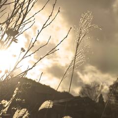 Sepia plant cloudscape