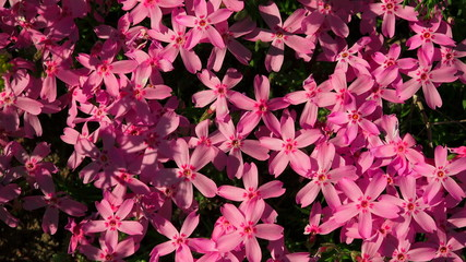 Purple flowers. 4K.