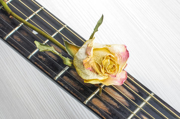 Wilted flower on guitar fret