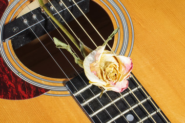 Faded rose flower on acoustic guitar