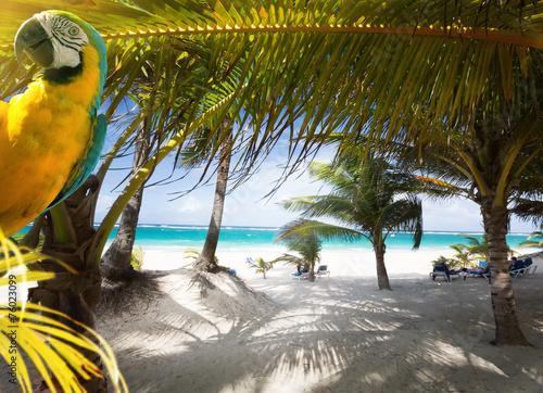 Art Vacation on Caribbean Beach Paradise - 76023099