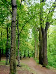 Leśny spacer