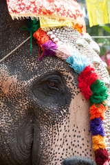 Decorated elephant in Hindu temple