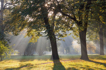 Sun rays in the morning mist in the park in early autumn