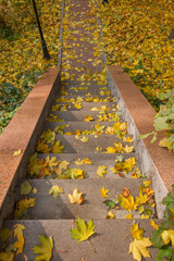 Autumn in the park, a staircase with fallen leaves