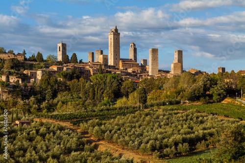 San Gimignano - Olivenhaine