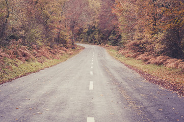 Road in the forest in autumn, fall colors