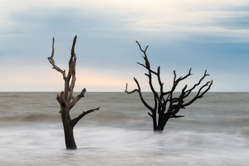 Hunting Island Skeleton Tree 3