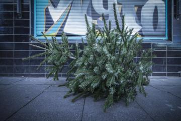 weihnachtsbaum danach - abends vor graffity