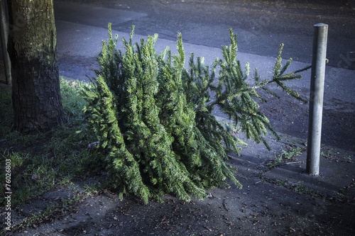Leinwandbild Motiv weihnachtsbaum danach, nachts an der straße