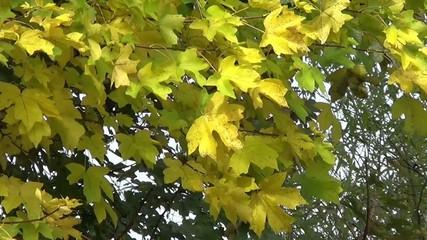 Gelbe Herbst Blätter