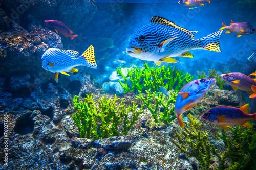 Leinwanddruck Bild Colorful aquarium